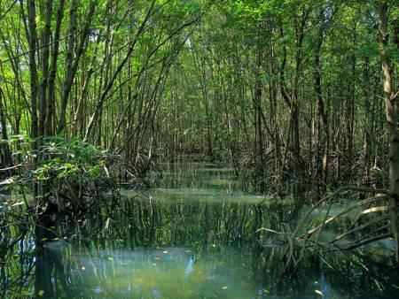 マングローブ湿地帯