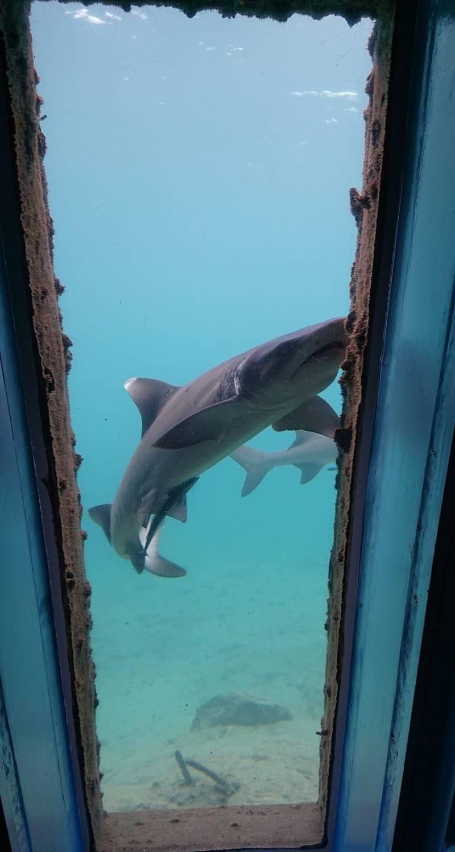 【運が良ければサメを間近で見学も!】