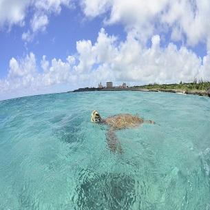 海を悠々と泳ぐウミガメ